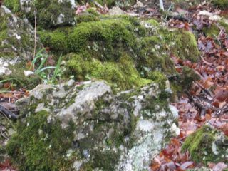 Mossy outcropping