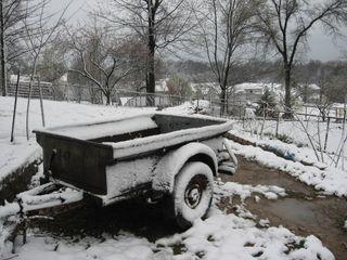 Yard 3-29-2009 003
