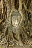 9001924-stone-buddha-head-in-the-tree-roots-ayutthaya-is-old-capital-of-thailand