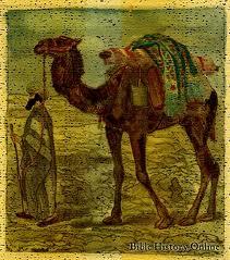 Traveler & Camel